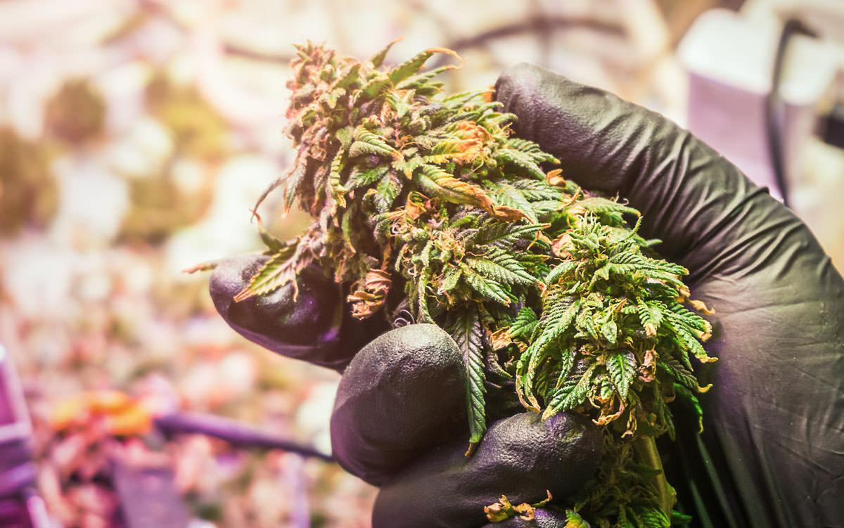 efecto marihuana depresion