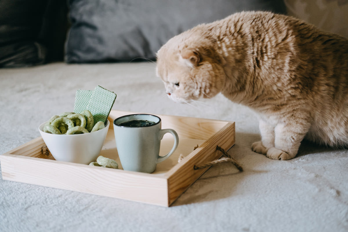 CBD Edibles, CBD Infused Snacks, Hemp wafers with cannabis. Testy CBD Snacks in bowl and cup of herbal tea on wooden tray on the sofa at home