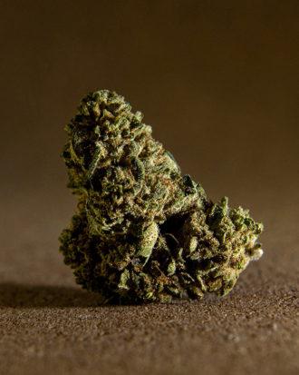 sweet mango comprar cbd cogollo marihuana legal sin thc
